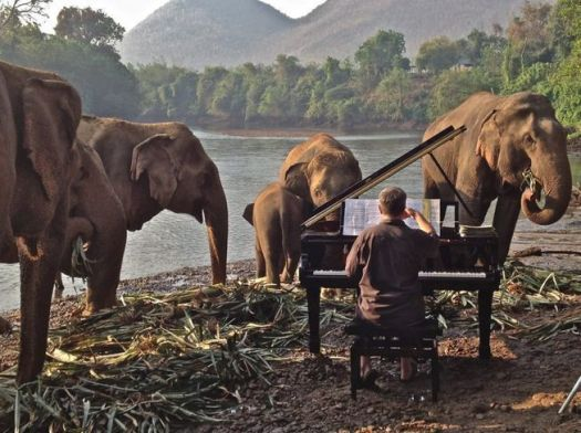 mnn elephants